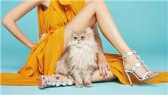 Aquazzura女鞋2018春夏系列新款广告画册
